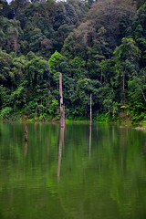 Royal Belum Rainforest (Phalinn Ooi) Tags: belumrainforestresort royalbelum gerik perak malaysia asia malaysian rainforest jungle hutan hujan tropika biodiversity nature adventure scenery outdoor landscape beautiful view alam semulajadi biology life flora fauna plants saltlick trekking hiking lake tasik temenggor banding island pulau sungai river waterfall airterjun orangasli jahai boat wild resort hotel wanderlust tourism tour travel cuti holiday explore relax bokeh canon people camera photography eos dslr 5dm4 family wife son pretty love sexy stunning trump melania kimjongnam deuter visitperak2017