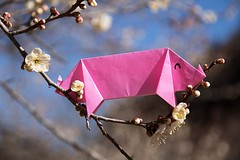 Pig and Plum (Ichigo Miyama) Tags: ブタさんとウメ pig plum origami ウメ 梅 ブタ prunusmume バラ科 rosaceae 春 spring flower plant うさぎ 折り紙 おりがみ paper