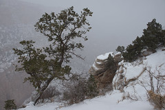 Timeless, winter 2012 Bright Angel Trail, Grand Canyon National Park, South Rim (kern.justin) Tags: park justin trees snow storm nationalpark grandcanyon snowstorm grand canyon kern national blizzard whiteout juniper southrim grandcanyonwinter grandcanyonnationalpark grandcanyonsnow justinkern grandcanyonstorm grandcanyonjuniper