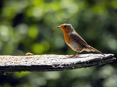 Robin (ThrottleUK) Tags: camera lens ed flash olympus lancashire ii 75300mm leigh msc omd pennington em5