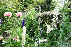 may garden (seaside.girl48) Tags: flowers plants june garden border cottage may