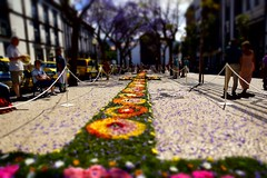 """Festa da Flor"" (Funchal / Madeira) (Aperture111-Thanks for 700000+ views) Tags: sony carlzeissvariosonnartdt1680mmf3545za slta65v sonyalpha65 slt65v me2youphotographylevel2 me2youphotographylevel1"