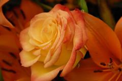 CHS FLOWERS