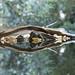 water reflection - toronto zoo - 2