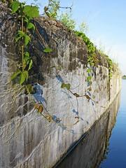 Draped (deanspic) Tags: shadow canal vines cornwall cornwallcanal g1x