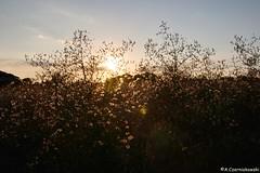 Through plants (adacze) Tags: sunset lightandshadow goldenhour zachódsłońca sd15 sigmasd15 sigmacamera złotagodzina