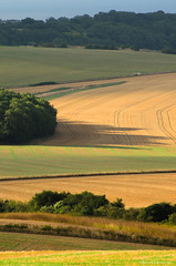 Fingers (Richard Paterson) Tags: park light west downs sussex south national wat downland amberely