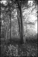 (soulshine59) Tags: trees blackandwhite landscape canon5d niksoftware artisticlandscape photoshopelements9