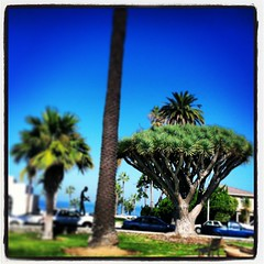 (salvagekat) Tags: ocean ca beach museum square sandiego modernart lofi lajolla squareformat iphoneography instagramapp uploaded:by=instagram foursquare:venue=4b9c154bf964a520404836e3