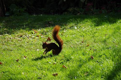 Ecureuil du Jardin des Plantes - Grenoble