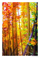 Magic In The Woods (SmokinToast) Tags: show camera travel family blue autumn light sunset wallpaper portrait usa sun storm abstract newmexico santafe southwest color sexy art fall love nature strange beautiful composition america forest photoshop canon painting landscape fire weird photo spring cool interesting flora friend perfect colorful paint dof shot dynamic skin sweet bokeh pastel awesome alien scenic picture brush romance canvas explore odd photograph american oil romantic 5d iphone compose ipad coolshot 2013 snapart pictureperfect markii