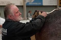 DSC_6784 (Ton van der Weerden) Tags: horses horse dutch de cheval belgian nederlands belges draft chevaux belgisch trait trekpaard trekpaarden ckcentralekeuringsintoedenrodeheinbrouwersvenhorst