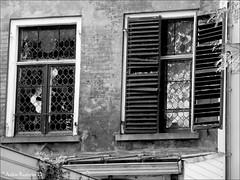 Glas in lood (Ankie Rusticus, I'm not much here) Tags: white black netherlands utrecht nederland zwart wit the