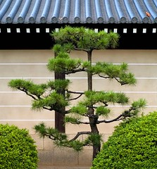 Kyoto (richard.scott1952) Tags: leica japan architecture garden temple kyoto buddhist religion m8 balance pruning