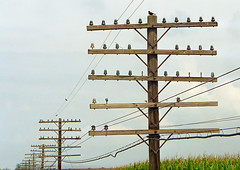 Old Chicago Burlington and Quincy Railroad Pole Line (monon738) Tags: old railroad electric illinois power pentax telephone railway powerlines electricity telegraph oldglass insulator antiqueglass pz10 electricpower glassinsulator pentaxpz10 mendotaillinois poleline chicagoburlingtonandquincyrailroad smcpf2880mmf3547