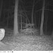 Barred Owl ... A Night Time Visitor