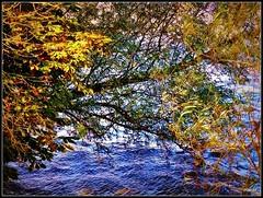 composition d'automne (marief76) Tags: seine eau vgtation fabuleuse