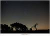 Het sterrenbeeld Orion (1D157550) (nandOOnline) Tags: lichtvervuiling strabrechtseheide strabrecht sterrenbeeld bomen boom orionnevel jupiter orion ster gemini planeet nachthemel lupus tweelingen haas nacht hemel heeze nbrabant nederland