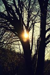Whisper of Spring (North Lands Photography) Tags: trees winter sun tree nature vertical season landscape photography landscapes washington spring nikon seasons northwest seasonal pacificnorthwest nikkor washingtonstate pnw northbend rattlesnakeridge rattlesnakelake northbendwashington verticalphotography nikond5200 northwestverticalphotographyvertical