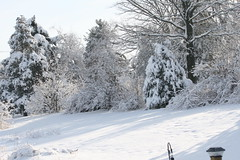 Winter Shadows (eyriel) Tags: trees winter shadow snow cold tree landscape shadows snowcover
