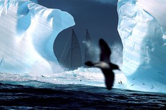 ANTARTICA (XavierDesmier) Tags: ocean blue sea mer white color colour bird ice expedition birds animal horizontal landscape vent landscapes boat ship wind antarctica aves bleu iceberg colourful bateau paysage blanc oiseau couleur antarctic colorphoto expdition icefrost antarctique waterelement photocouleur plesud thesouthpole enlargeur boatother scientificexpedition seamiscellaneous expeditionmiscellaneous expdition damierducap eauelement glacegel plesud