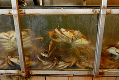 Live Dungeness Crabs for sale (birdgal5) Tags: seattle washington nikon 1755mmf28g pikeplacemarket d200 kingcounty 1755mmf28gdx livedungenesscrabs