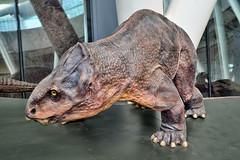 Dinosaurs Exhibition #34 (chooyutshing) Tags: singapore exhibition dinosaurs marinabay marinabaysands artsciencemuseum