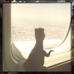 Hello Pacific!!! #toy #dinosaur #socal # vacation (jon_breazeale) Tags: hipstamatic canocafenolfilm susielens