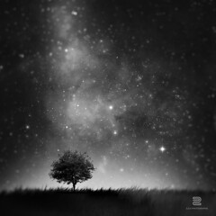 Not so Alone (S.D.G Photographie) Tags: white black tree photoshop square stars alone tales magic creative nb creation galaxy féerique