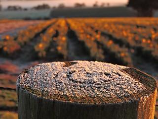 Frosty fence post