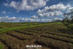 Meghalaya landscape (shaan2noo) Tags: landscape shillong meghalaya northeast northeastindia incredibleindia khasi eastkhasihills hills cultivation agriculture skyscape greenary bluesky ultrawideangle tokina nikon