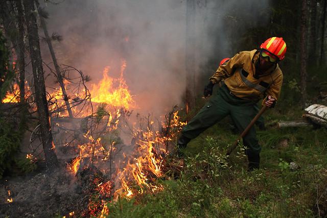 Собственников земельных участков, прилежащих клесу, вынудили заботиться опожарной безопасности