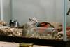 Vivi's Favorite Toy (Mushi Kid) Tags: gerbil depthoffield nikon d750 closeup telephoto animal jar