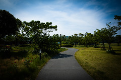 R0000099-1 (oncoinco0920) Tags: street blue sky cloud tree green japan photography photo gr load naruto tokushima retouch ricoh