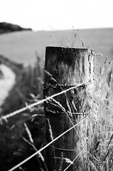 Old Barb Wire Fence (Louis Bamford) Tags: park uk trip morning travel blue autumn winter friends light summer portrait england people urban blackandwhite bw sun white holiday black blur france hot cold color colour macro me beautiful night photoshop buildings lens photography evening student eyes nikon focus exposure bokeh walk perspective sharp environment nikkor effect edit nikkor50mm iphoneography nikond7000 nikkor50mm18g nikkond7000 nikond5100