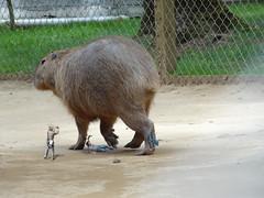429 (Ailur Kyodaina) Tags: animals giant big huge