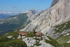 IMG_0968 (Laurent Lebois ©) Tags: laurentlebois france nature montagne mountain montana alpes alps alpen paysage landscape пейзаж paisaje isère vercors