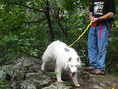 """Princess Looking For A High Rock To Perch Upon & Be """"Queen Of The Mountain"""" • <a style=""""font-size:0.8em;"""" href=""""http://www.flickr.com/photos/96196263@N07/9730275478/"""" target=""""_blank"""">View on Flickr</a>"""