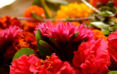 Ganpati flowers (arunsprabhu) Tags: red flower redflower niceflower ganpatiflower