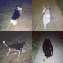 Late-night walks (scoodog / Tom Myler) Tags: 6x6 dogs blurry oliver latenight ralph bose iphone boomboom diptic dogwalks mobilephonephotography bananacam iphoneography iphone4s