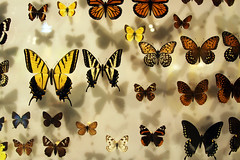 Fall Colors (When lost in.....) Tags: california bugs valley critters shafter insectlore southcentralcalifornia bugseum insectlorebugseum