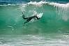 Duck (Bradley O'Brien) Tags: ocean sea surf australia nsw nikond90 wamberalbeach