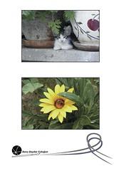 """45. Sergi <a style=""""margin-left:10px; font-size:0.8em;"""" href=""""http://www.flickr.com/photos/110347743@N05/11462534275/"""" target=""""_blank"""">@flickr</a>"""