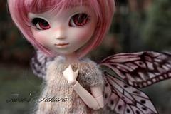 Sakura... pullip FC (Rose*aime*OH!) Tags: pullip poupée pullipdoll pullipobitsu pullipfc roseaimeoh