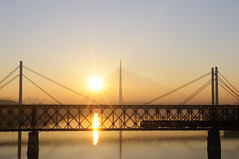 Three bridges and train (panemoj) Tags: railroad bridge sunset train river serbia transport trail belgrade sava railbridge