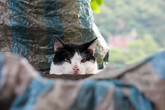 IMG_6445 (tomd_o_g) Tags: cat