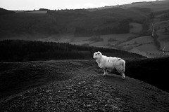 Simple (Doodles N' Dabbles) Tags: blackandwhite animal sheep hills