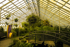 "Buffalo and Erie County Botanic Garden-Fern room at rainforest • <a style=""font-size:0.8em;"" href=""http://www.flickr.com/photos/59137086@N08/12039141244/"" target=""_blank"">View on Flickr</a>"