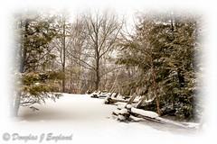 window onto winter (D J England) Tags: ontario guelph arboretum southernontario canonef1740f4l uofg dje djengland djenglandphotography douglasjengland canoneos5dmkiii