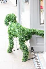 Dog (Anita K Firth) Tags: york dog festival topiary box hedge wee february viking 2014 cockingleg